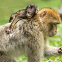 Picky Eaters: Getting the Monkey off your Back